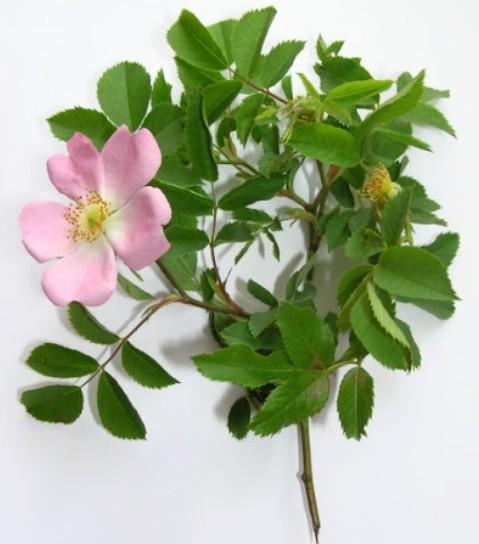 BIO-BACHOVKY Deprese květové esence 20 ml 2