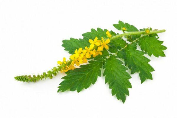 BIO-BACHOVKY Strach květové esence 20 ml 3