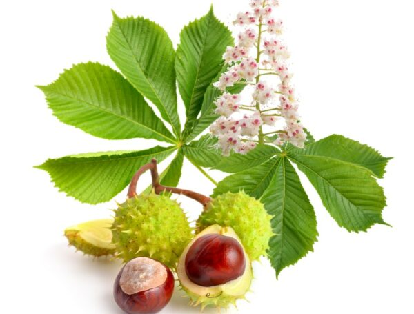 BIO-BACHOVKY Zkouška/závody květové esence 20 ml 2